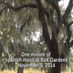 One minute of spanish moss at Bok Tower Gardens