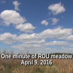 One minute of RDU Meadow