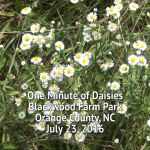 One Minute Of Daisies